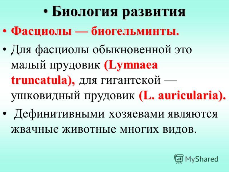 Биология развитияБиология развития Фасциолы биогельминты.Фасциолы биогельминты. (Lymnaea truncatula), (L. auricularia).Для фасциолы обыкновенной это малый прудовик (Lymnaea truncatula), для гигантской ушковидный прудовик (L. auricularia). Дефинитивны