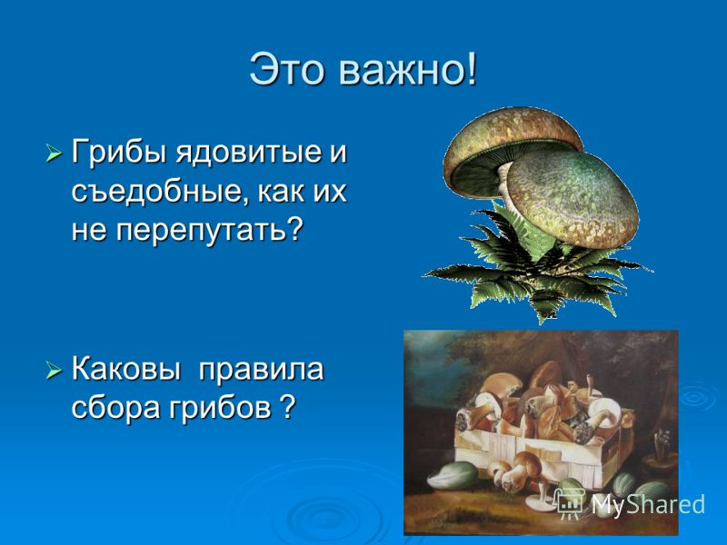 Это важно! Грибы ядовитые и съедобные, как их не перепутать? Грибы ядовитые и съедобные, как их не перепутать? Каковы правила сбора грибов ? Каковы правила сбора грибов ?