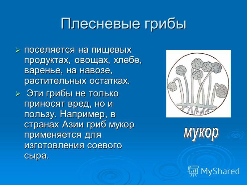 Плесневые грибы поселяется на пищевых продуктах, овощах, хлебе, варенье, на навозе, растительных остатках. поселяется на пищевых продуктах, овощах, хлебе, варенье, на навозе, растительных остатках. Эти грибы не только приносят вред, но и пользу. Напр