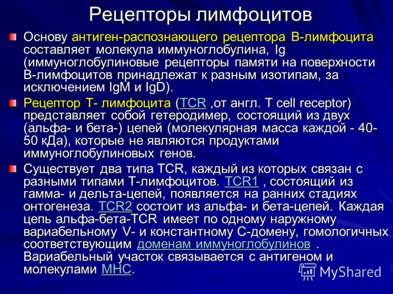 Рецепторы лимфоцитов Основу антиген-распознающего рецептора В-лимфоцита составляет молекула иммуноглобулина, Ig (иммуноглобулиновые рецепторы памяти на поверхности В-лимфоцитов принадлежат к разным изотипам, за исключением IgM и IgD). Рецептор T- лим