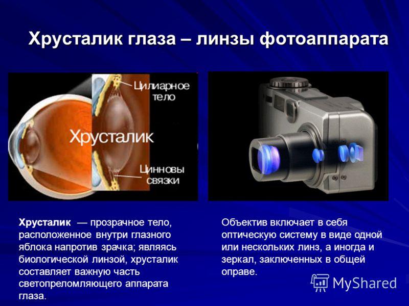 Хрусталик глаза – линзы фотоаппарата Объектив включает в себя оптическую систему в виде одной или нескольких линз, а иногда и зеркал, заключенных в общей оправе. Хрусталик прозрачное тело, расположенное внутри глазного яблока напротив зрачка; являясь