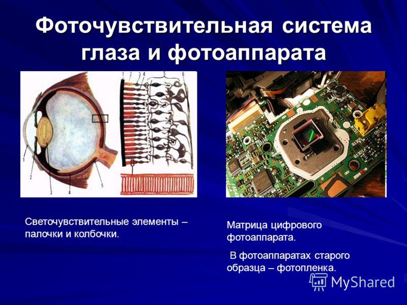 Фоточувствительная система глаза и фотоаппарата Светочувствительные элементы – палочки и колбочки. Матрица цифрового фотоаппарата. В фотоаппаратах старого образца – фотопленка.