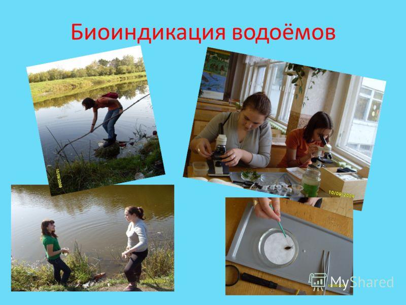 Биоиндикация водоёмов