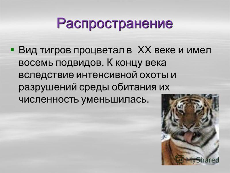 Распространение Вид тигров процветал в XX веке и имел восемь подвидов. К концу века вследствие интенсивной охоты и разрушений среды обитания их численность уменьшилась.