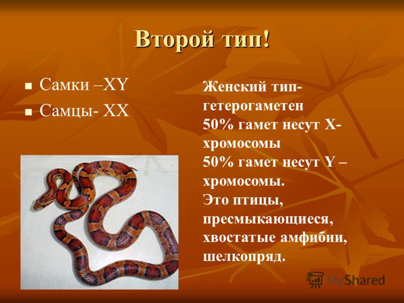 Второй тип! Самки –ХY Самцы- ХХ Женский тип- гетерогаметен 50% гамет несут Х- хромосомы 50% гамет несут Y – хромосомы. Это птицы, пресмыкающиеся, хвостатые амфибии, шелкопряд.