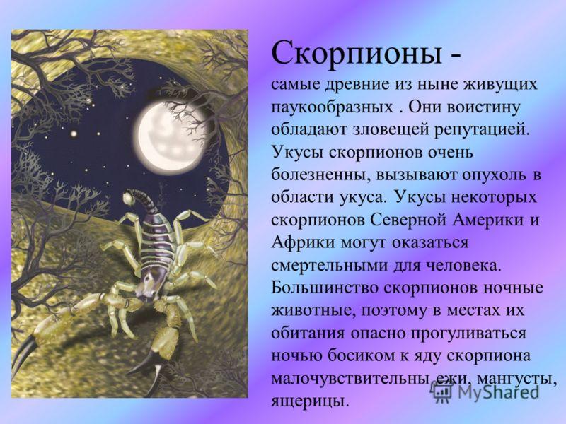 Скорпионы - самые древние из ныне живущих паукообразных. Они воистину обладают зловещей репутацией. Укусы скорпионов очень болезненны, вызывают опухоль в области укуса. Укусы некоторых скорпионов Северной Америки и Африки могут оказаться смертельными
