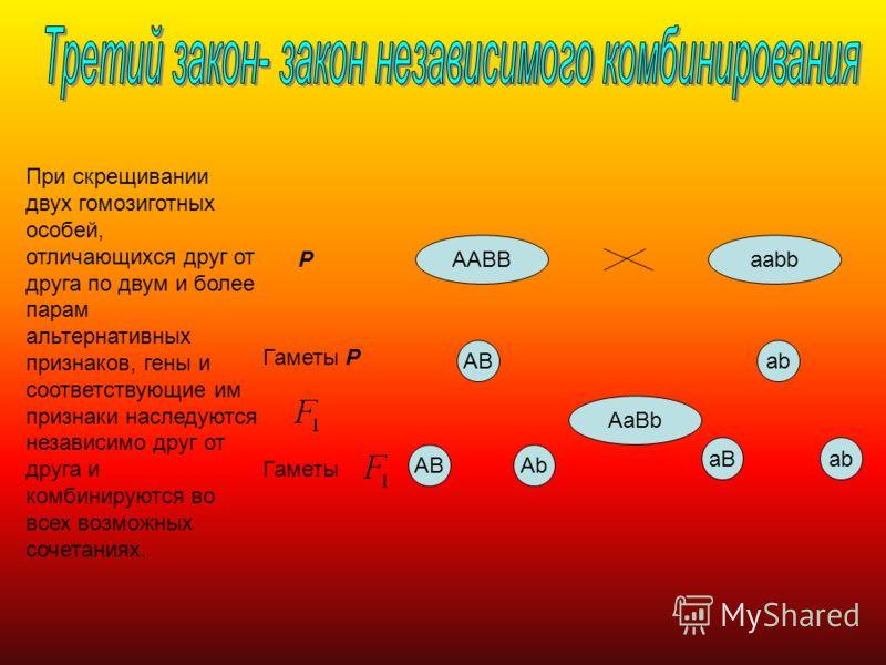 При скрещивании двух гомозиготных особей, отличающихся друг от друга по двум и более парам альтернативных признаков, гены и соответствующие им признаки наследуются независимо друг от друга и комбинируются во всех возможных сочетаниях. ААВВааbb AaBb A