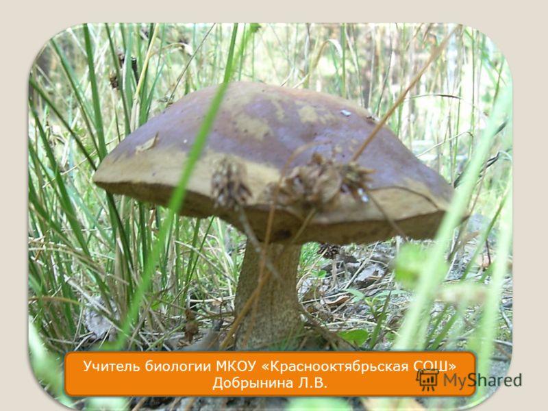 Что мы знаем о грибном промысле? Учитель биологии МКОУ «Краснооктябрьская СОШ» Добрынина Л.В.