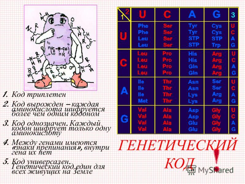 ГЕНЕТИЧЕСКИЙ КОД 1. К од т риплетен 2. Код вырожден – каждая аминокислота ш ифруется более ч ем о дним к одоном 3. Код однозначен. Каждый кодон ш ифрует т олько о дну аминокислоту 4. Между генами имеются « знаки п репинания », в нутри гена и х н ет 5