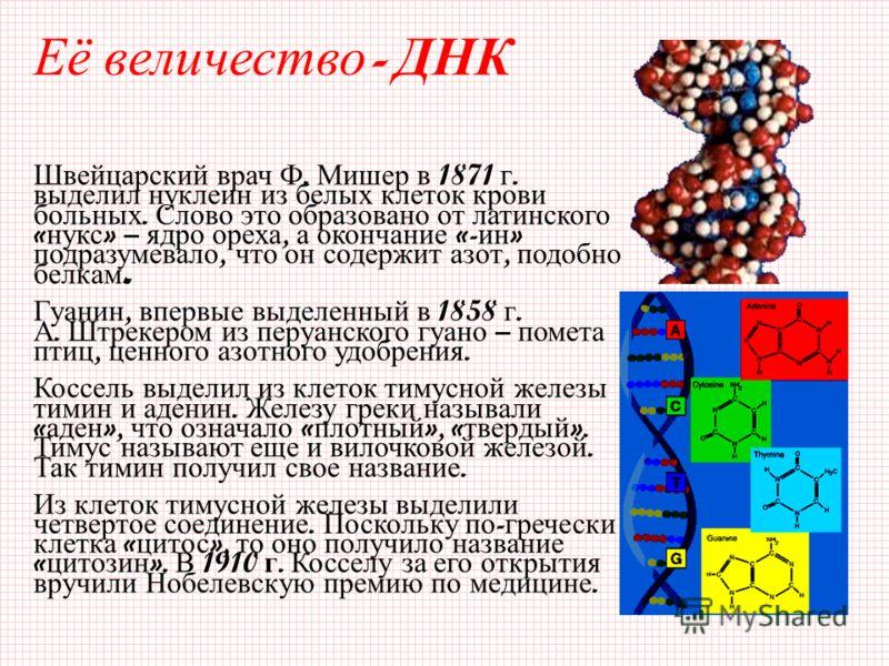 Её в еличество - Д НК Швейцарский врач Ф. Мишер в 1871 г. выделил нуклеин из белых клеток крови больных. Слово это образовано от латинского « нукс » – ядро ореха, а окончание «- ин » подразумевало, что он содержит азот, подобно белкам. Гуанин, впервы
