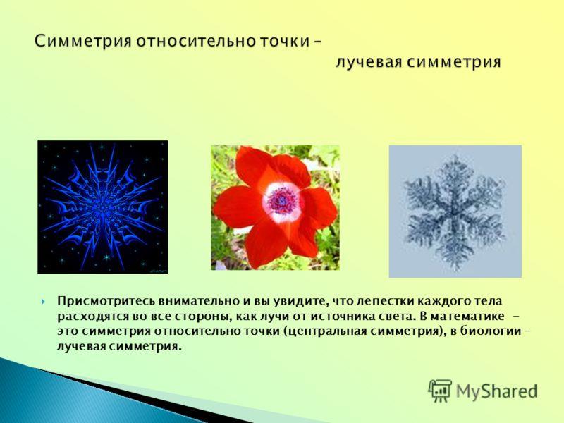 Присмотритесь внимательно и вы увидите, что лепестки каждого тела расходятся во все стороны, как лучи от источника света. В математике - это симметрия относительно точки (центральная симметрия), в биологии – лучевая симметрия.