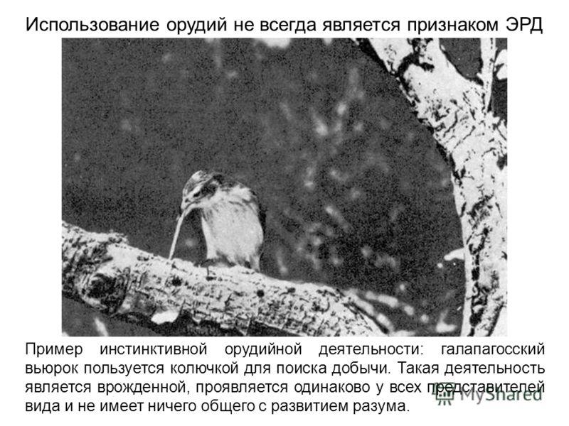 Пример инстинктивной орудийной деятельности: галапагосский вьюрок пользуется колючкой для поиска добычи. Такая деятельность является врожденной, проявляется одинаково у всех представителей вида и не имеет ничего общего с развитием разума. Использован