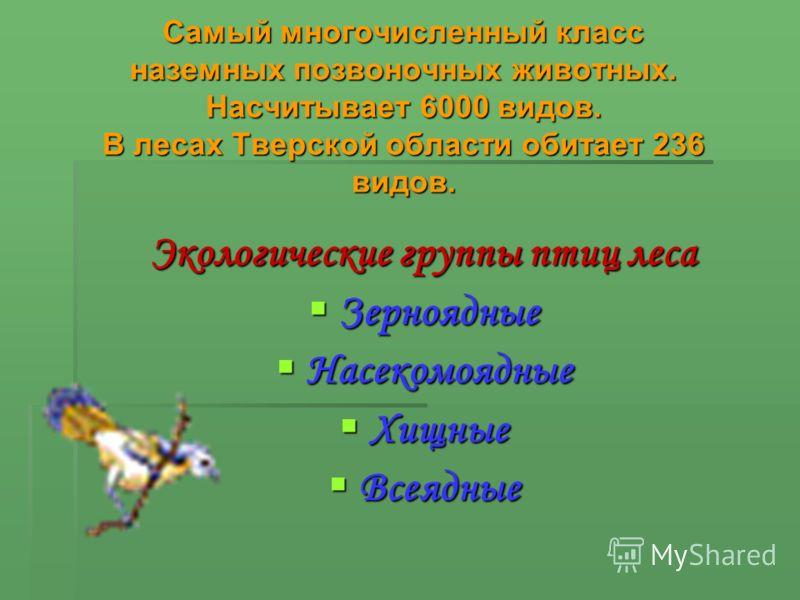 Самый многочисленный класс наземных позвоночных животных. Насчитывает 6000 видов. В лесах Тверской области обитает 236 видов. Экологические группы птиц леса Зерноядные Зерноядные Насекомоядные Насекомоядные Хищные Хищные Всеядные Всеядные