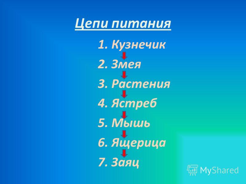 Цепи питания 1. Кузнечик 2. Змея 3. Растения 4. Ястреб 5. Мышь 6. Ящерица 7. Заяц