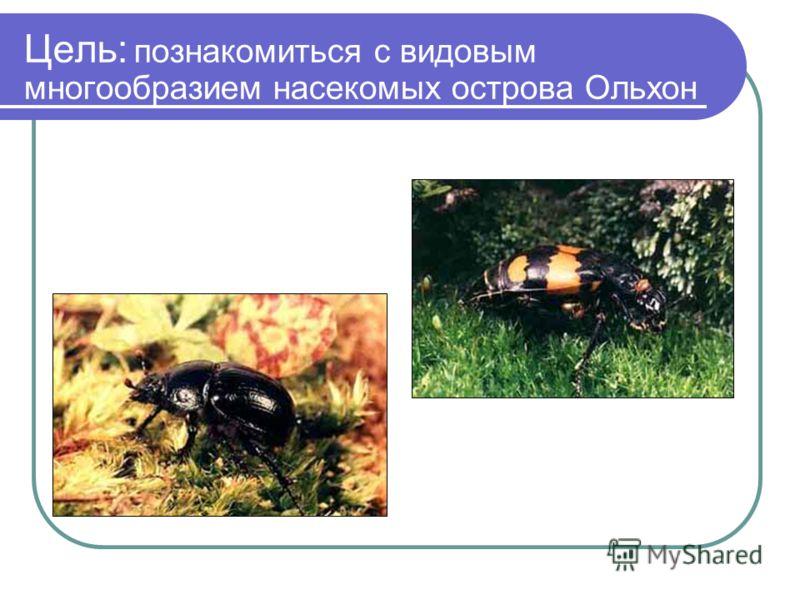 Цель: познакомиться с видовым многообразием насекомых острова Ольхон
