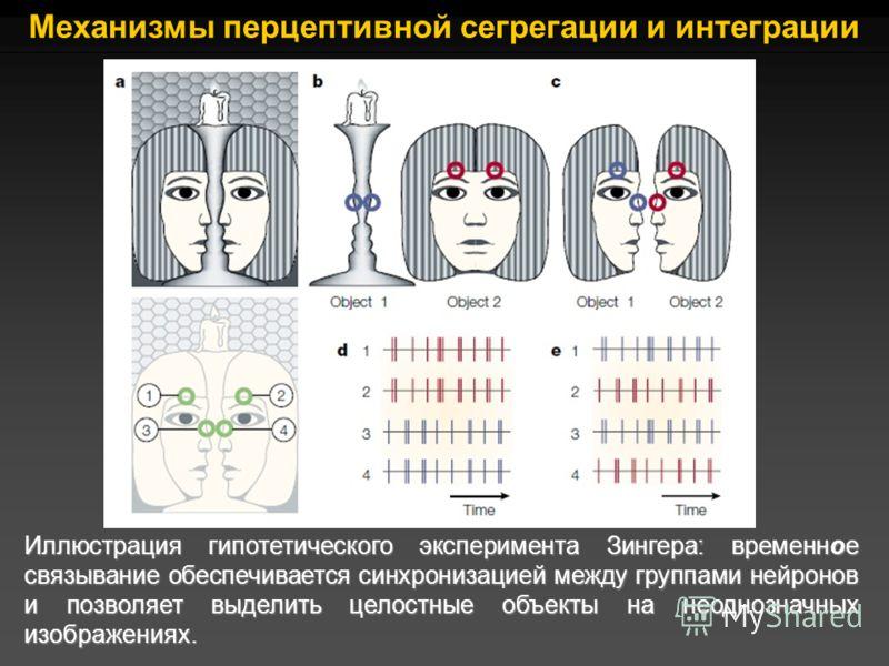 Иллюстрация гипотетического эксперимента Зингера: временное связывание обеспечивается синхронизацией между группами нейронов и позволяет выделить целостные объекты на неоднозначных изображениях. Механизмы перцептивной сегрегации и интеграции