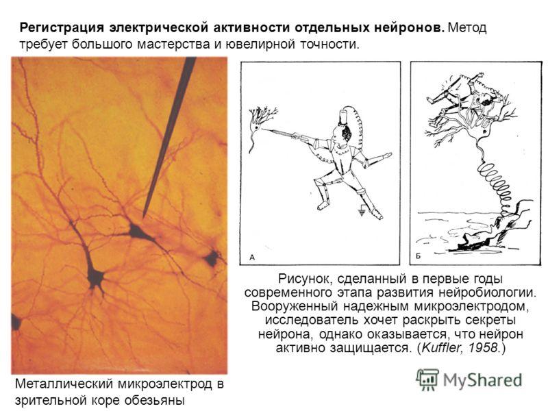 Металлический микроэлектрод в зрительной коре обезьяны Регистрация электрической активности отдельных нейронов. Метод требует большого мастерства и ювелирной точности. Рисунок, сделанный в первые годы современного этапа развития нейробиологии. Вооруж