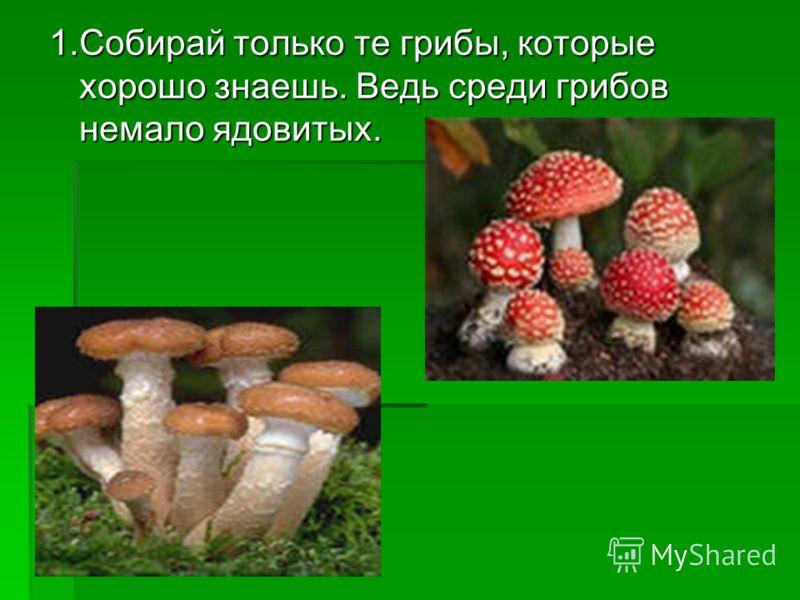 1.Собирай только те грибы, которые хорошо знаешь. Ведь среди грибов немало ядовитых.