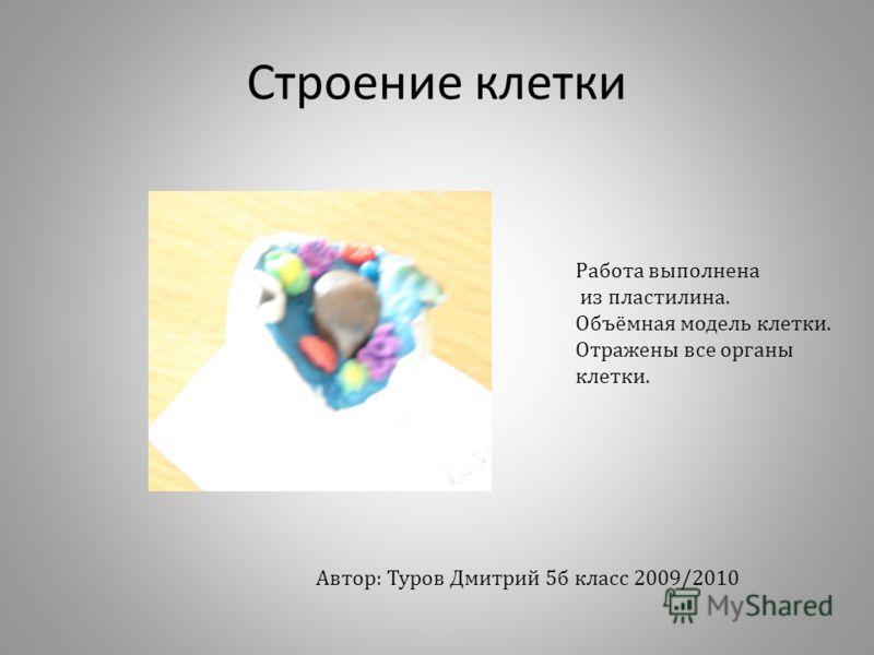 Строение клетки Работа выполнена из пластилина. Объёмная модель клетки. Отражены все органы клетки. Автор: Туров Дмитрий 5б класс 2009/2010