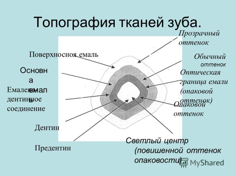 Топография тканей зуба. Основн а емал ь Емалево- дентинное соединение Предентин Дентин Прозрачный оттенок Оптическая граница емали (опаковой оттенок) Обычный оттенок Светлый центр (повишенной оттенок опаковости) Опаковой оттенок Поверхносноя емаль