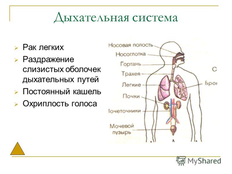 Дыхательная система Рак легких Раздражение слизистых оболочек дыхательных путей Постоянный кашель Охриплость голоса