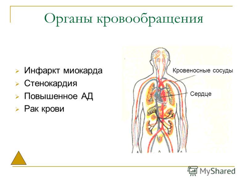 Органы кровообращения Инфаркт миокарда Стенокардия Повышенное АД Рак крови Кровеносные сосуды Сердце