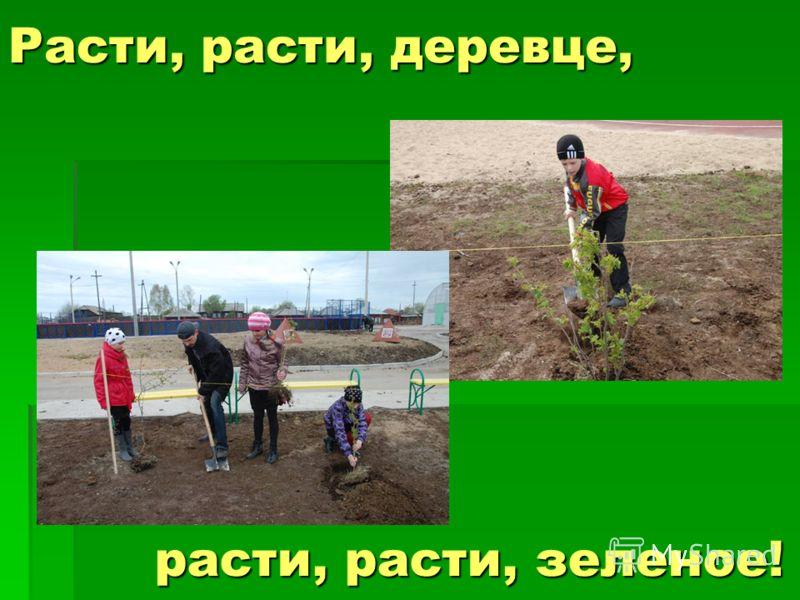 Расти, расти, деревце, расти, расти, зеленое!