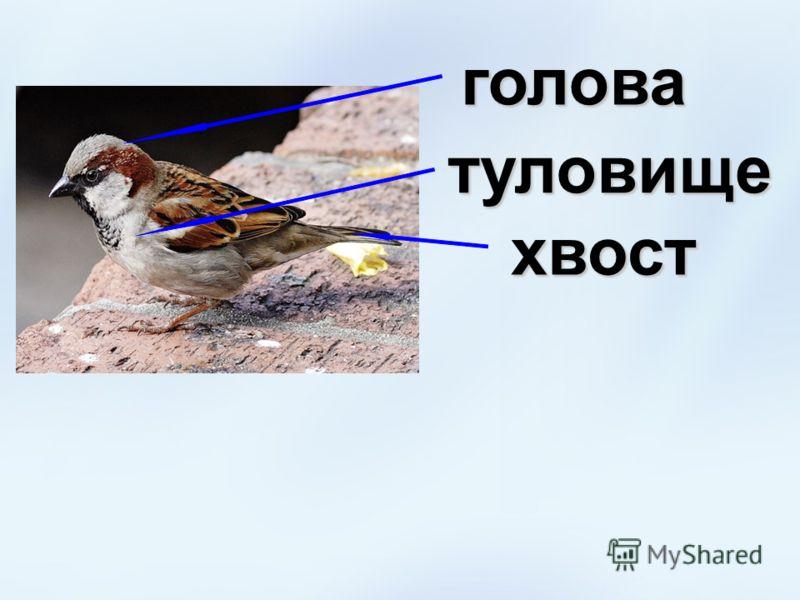 голова туловище хвост