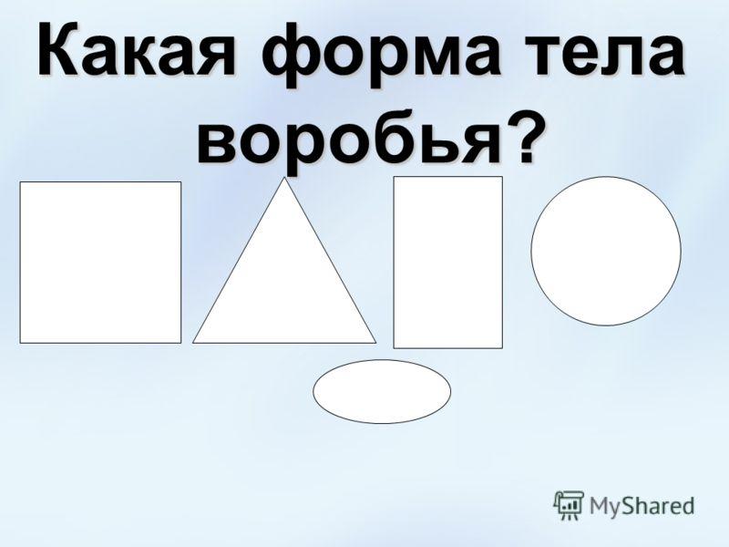 Какая форма тела воробья?
