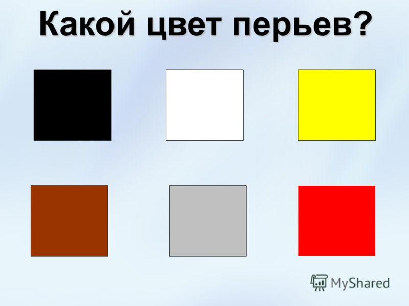 Какой цвет перьев?