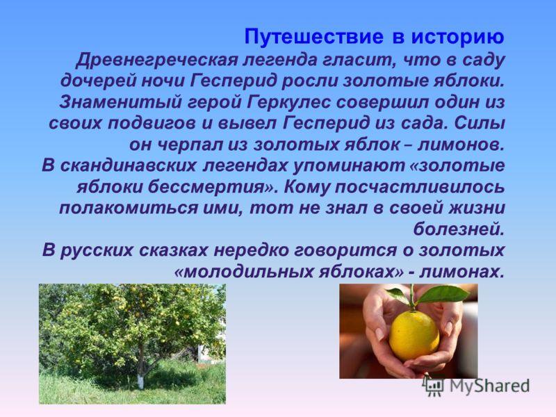 Путешествие в историю Древнегреческая легенда гласит, что в саду дочерей ночи Гесперид росли золотые яблоки. Знаменитый герой Геркулес совершил один из своих подвигов и вывел Гесперид из сада. Силы он черпал из золотых яблок – лимонов. В скандинавски