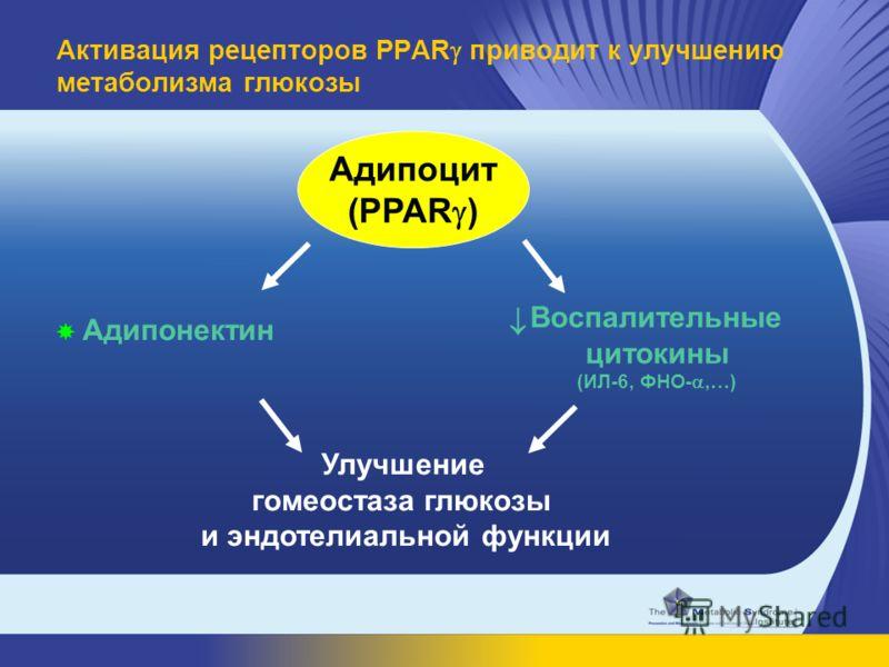 Улучшение гомеостаза глюкозы и эндотелиальной функции Адипонектин Адипоцит (PPAR ) Воспалительные цитокины (ИЛ-6, ФНО-,…) Активация рецепторов PPAR приводит к улучшению метаболизма глюкозы