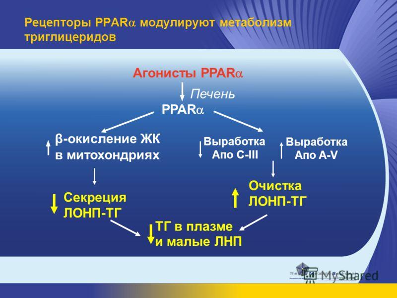 β-окисление ЖК в митохондриях Агонисты PPAR PPAR Печень ТГ в плазме Выработка Апo A-V Выработка Апо C-III Очистка ЛОНП-ТГ и малые ЛНП Секреция ЛОНП-ТГ Рецепторы PPAR модулируют метаболизм триглицеридов