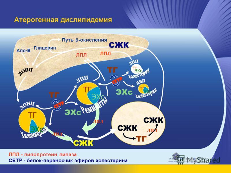 ТГ ЭХс CETP ТГ FFA CETP ТГ ЛПЛ СЖК ТГ ЛПЛ ТГ ЭХс СЖК Aпо-B Путь -окисления ЛПЛ ТГ ЭХс Атерогенная дислипидемия ЛПЛ - липопротеин липаза CETP - белок-переносчик эфиров холестерина Глицерин