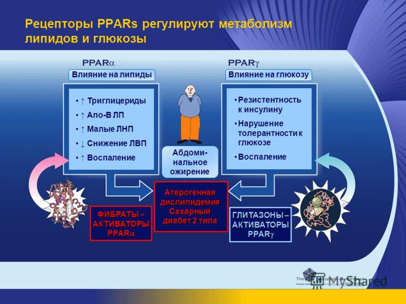 Рецепторы PPARs регулируют метаболизм липидов и глюкозы Влияние на липидыВлияние на глюкозу Триглицериды Апо-В ЛП Малые ЛНП Снижение ЛВП Воспаление Резистентность к инсулину Нарушение толерантности к глюкозе Воспаление Абдоми- нальное ожирение ФИБРАТ