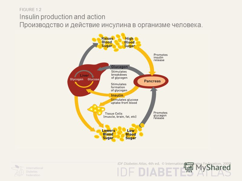 FIGURE 1.2 Insulin production and action Производство и действие инсулина в организме человека.