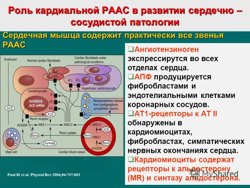 Роль кардиальной РААС в развитии сердечно – сосудистой патологии Сердечная мышца содержит практически все звенья РААС Paul M et al. Physiol Rev 2006;86:747-803 Ангиотензиноген экспрессирутся во всех отделах сердца. АПФ продуцируется фибробластами и э