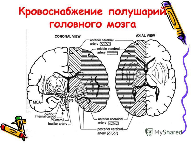 Кровообращение в голове человека схема