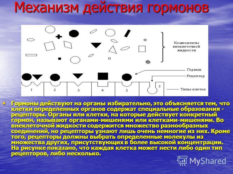 Механизм действия гормонов Гормоны действуют на органы избирательно, это объясняется тем, что клетки определенных органов содержат специальные образования - рецепторы. Органы или клетки, на которые действует конкретный гормон, называют органами-мишен