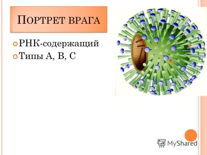 П ОРТРЕТ ВРАГА РНК-содержащий Типы А, В, С