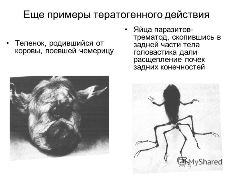 норма паразитов в организме