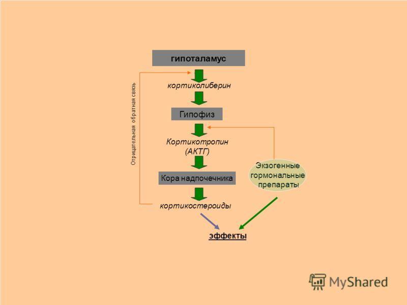 гипоталамус кортиколиберин Гипофиз Кортикотропин (АКТГ) Кора надпочечника кортикостероиды Отрицательная обратная связь Экзогенные гормональные препараты эффекты
