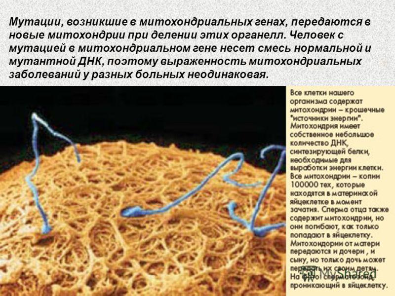 Мутации, возникшие в митохондриальных генах, передаются в новые митохондрии при делении этих органелл. Человек с мутацией в митохондриальном гене несет смесь нормальной и мутантной ДНК, поэтому выраженность митохондриальных заболеваний у разных больн