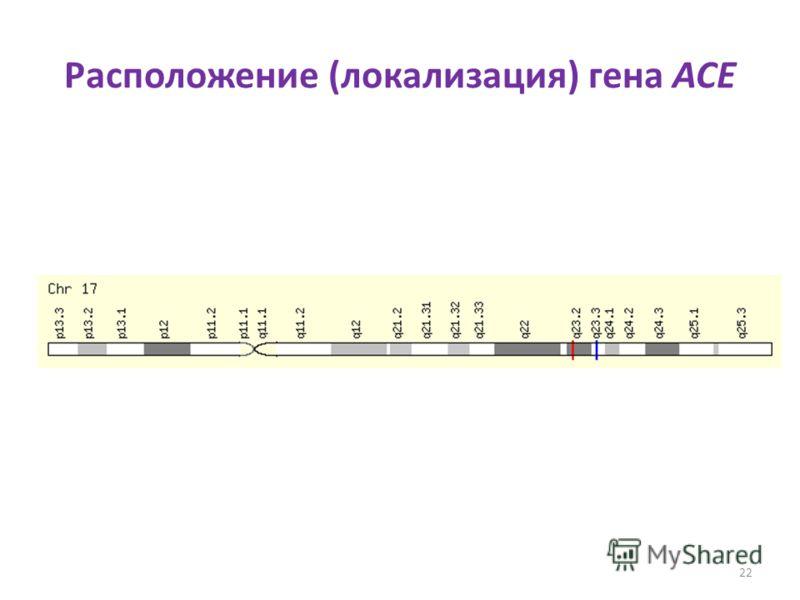 Расположение (локализация) гена ACE 22