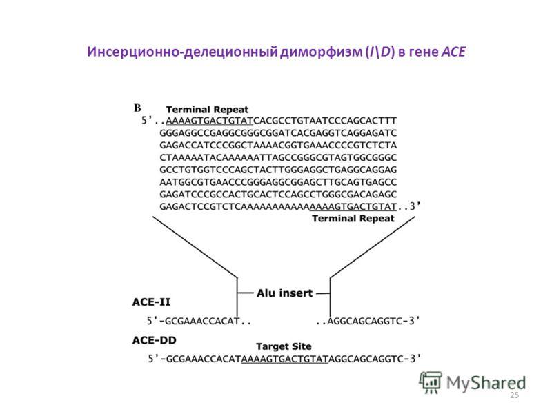 Инсерционно-делеционный диморфизм (I\D) в гене ACE 25