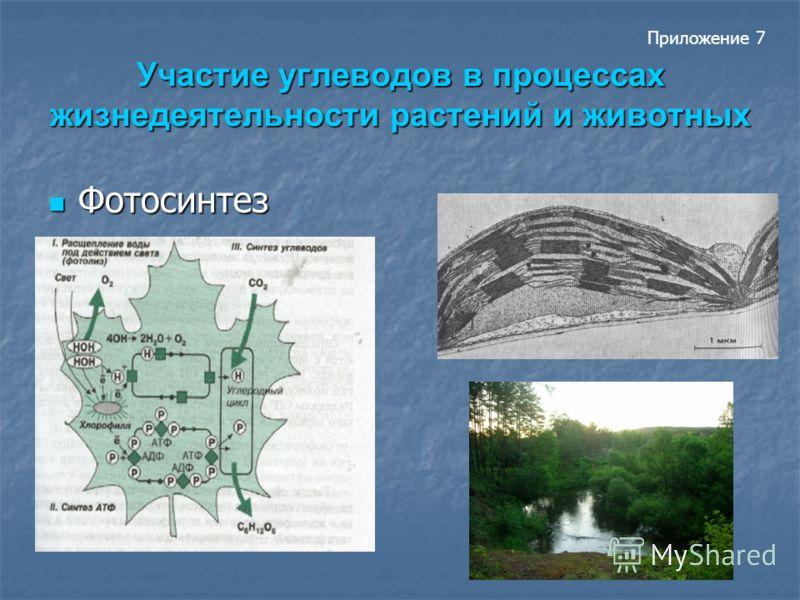 Участие углеводов в процессах жизнедеятельности растений и животных Фотосинтез Фотосинтез Приложение 7