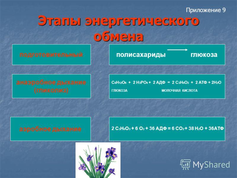 Этапы энергетического обмена полисахариды глюкозаподготовительный анаэробное дыхание (гликолиз) С 6 Н 12 О 6 + 2 Н 3 РО 4 + 2 АДФ = 2 С 3 Н 6 О 3 + 2 АТФ + 2Н 2 О ГЛЮКОЗА МОЛОЧНАЯ КИСЛОТА аэробное дыхание 2 С 3 Н 6 О 3 + 6 О 2 + 36 АДФ = 6 СО 2 + 38