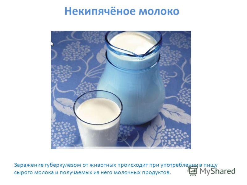 Некипячёное молоко Заражение туберкулёзом от животных происходит при употреблении в пищу сырого молока и получаемых из него молочных продуктов.