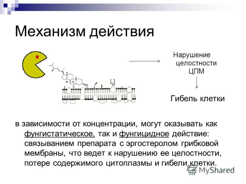 Механизм действия в зависимости от концентрации, могут оказывать как фунгистатическое, так и фунгицидное действие: связыванием препарата с эргостеролом грибковой мембраны, что ведет к нарушению ее целостности, потере содержимого цитоплазмы и гибели к
