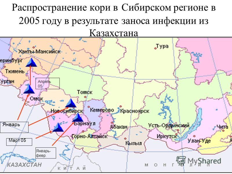 Распространение кори в Сибирском регионе в 2005 году в результате заноса инфекции из Казахстана КАЗАХСТАН Январь- февр. Март 05 Январь Апрель 05